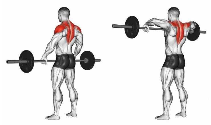 en etkili omuz hareketleri upright row hareketi